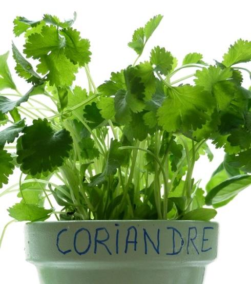 pot-herbes-aromatiques